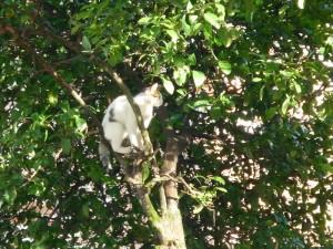 gato en el arbol