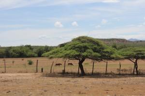 paisaje seco del desierto, san agustin