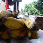 Bananos de la plaza de la américa
