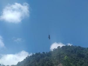 aves volando en dabeiba